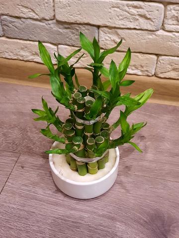 Бамбук лаки в керамике_room148