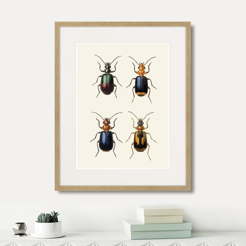 Марк Кейтсби - Assorted Beetles №4, 1735г.
