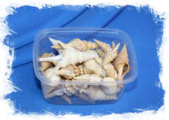 Ракушки для морского декора купить