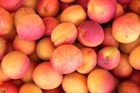JEFF 7 Elements - Peach Deluxe
