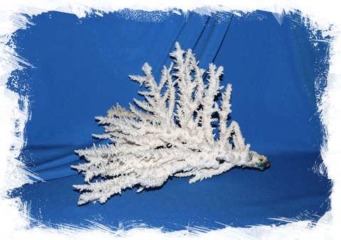 Ветвь коралла