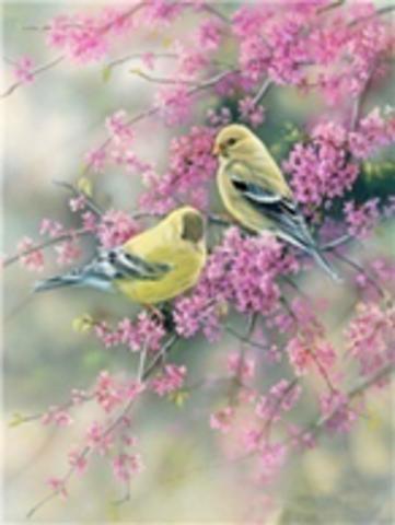 Картина раскраска по номерам 40x50 Птицы на цветущей ветке