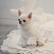 1834 LD - Блуза для собак