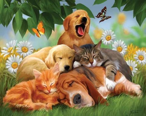 Картина раскраска по номерам 40x50 Любовь домашних животных