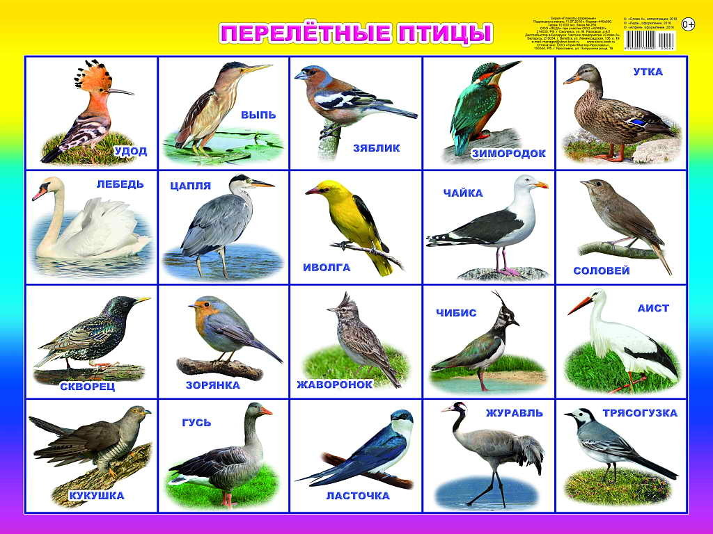 Птицы с картинками и их названия