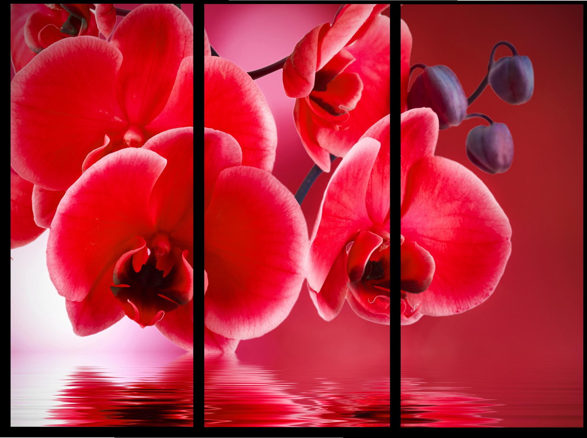 """Цветы Модульная картина """"Красные орхидеи"""" М710.png"""