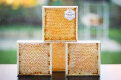 Натуральный мед в сотах HoneyForYou, 350 г