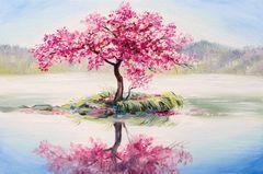 Картина раскраска по номерам 40x50 Остров сакуры