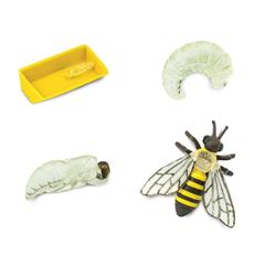 Состав набора Жизненный цикл пчелы, Safari Ltd.