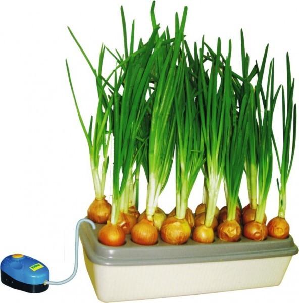"Для дачи, сада, огорода Домашняя грядка гидропонная ""Луковое счастье"" e0797d06e8e3cf912e1d18a7eee10631.jpg"
