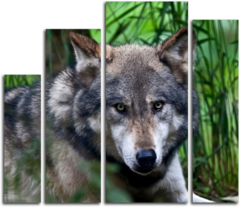 """Модульная картина """"Спокойный волк"""""""