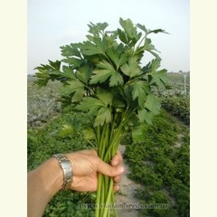 Итальянский гигант новая семена петрушки (Clause / Клос)