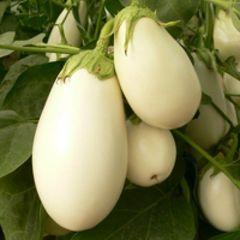 Бибо F1 семена баклажана (Seminis / Семинис)