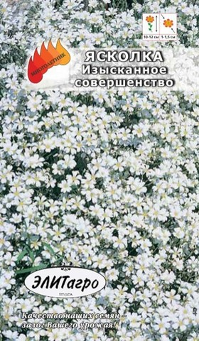 Семена Ясколка Серебряный ковер, Мнг