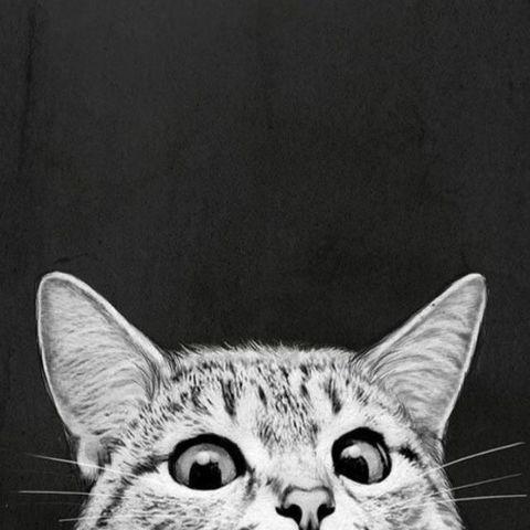 Алмазная Мозаика 40x50 Кот подглядывает