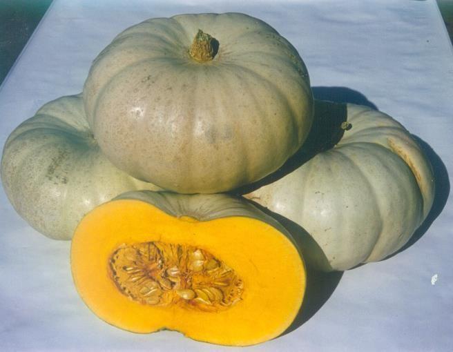 Тыква Краун Принц F1 семена тыквы (Sakata / Саката) Краун_Принц_F1_семена_овощей_оптом.jpg