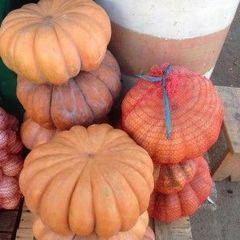 Мускатная прованская семена тыквы (Clause / Клос)
