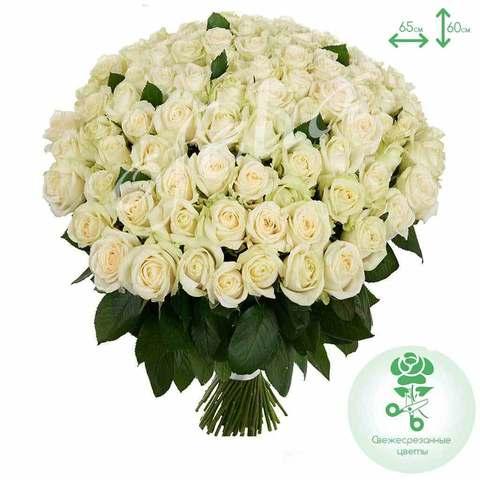 71 белая роза Avalanche 60 см
