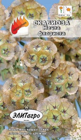 Семена Скабиоза Мечта флориста, Одн