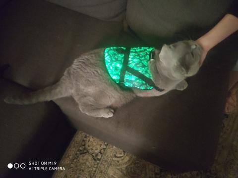 Светящийся комбинезон для кошек/собачек