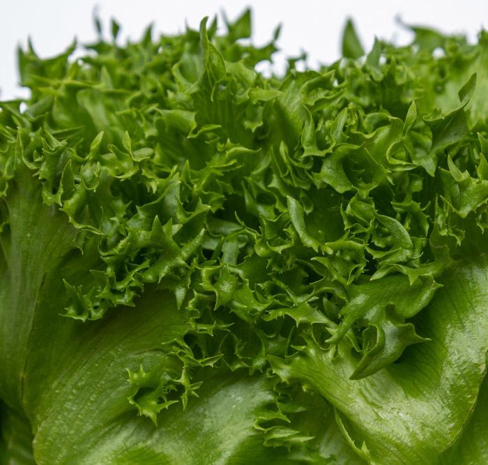 Nunhems Финстар семена салата листового (Nunhems / Нюнемс) Финстар_салат_листовой-.jpg