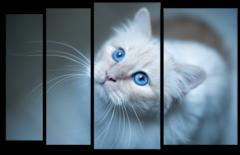 """Модульная картина """"Голубоглазая кошка"""""""
