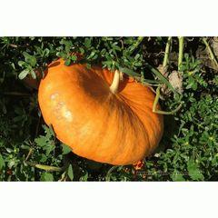 Руж Виф семена тыквы (Clause / Клос)