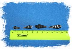 Батиллария Зоналис 1,5 - 3 см.