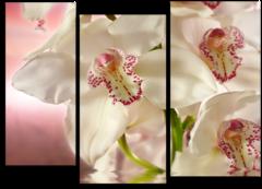 """Модульная картина """"Цветущая орхидея"""""""