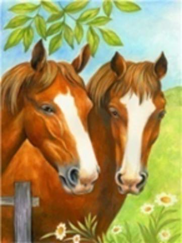 Картина раскраска по номерам 40x50 Пара лошадей