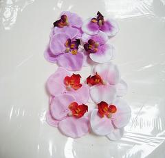 Орхидея фаленопсис 7 см, 1 шт.