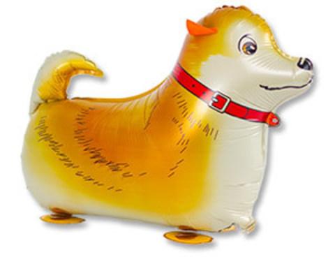 Ходячий шар Собака рыжая