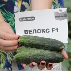 Велокс F1 семена огурца партенокарпического (Nunhems / Нюнемс)