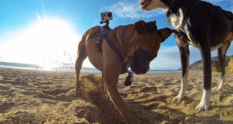 Fetch Dog Harness - Крепление на собаку