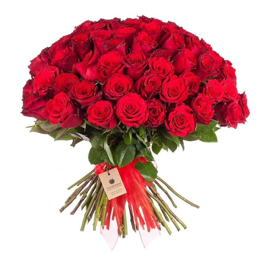 71 бордовая роза