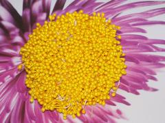 Тычинки-капельки желтые