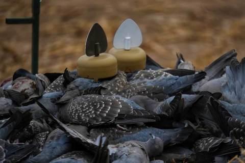 Механическая приманка на голубя Mojo Decoys Dove A Flickers