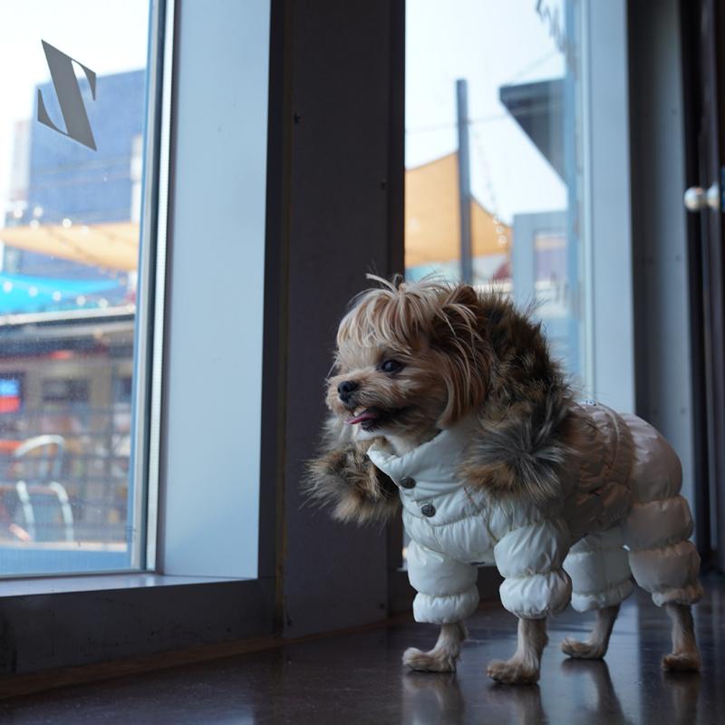 446 PA - Комбинезоны для собак