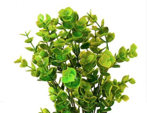 Эвкалипт на вставке, 32см, зеленый