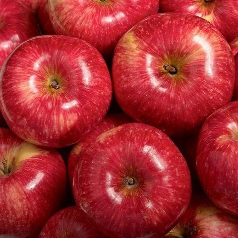 Яблоня летний сорт Мантет