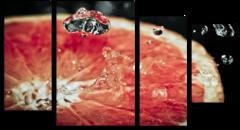 "Модульная картина ""Сочный грейпфрут"""