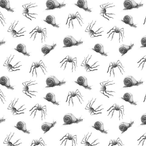 пауки и улитки на белом фоне