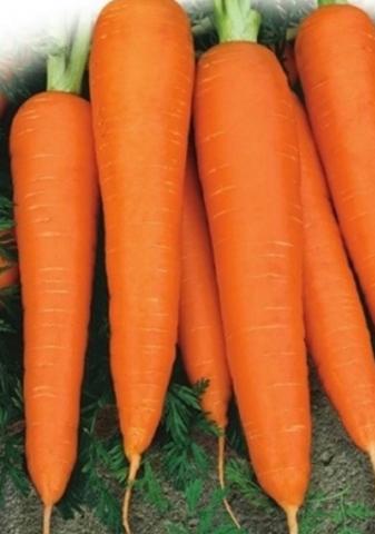 Семена Морковь Лосиноостровская 13 б/п
