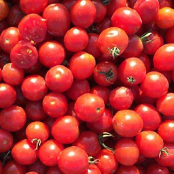 Томат ТО 1435 F1 семена томата полудетерминантного (Seminis / Семинис) ТО_1435_семена_овощей_оптом.jpg