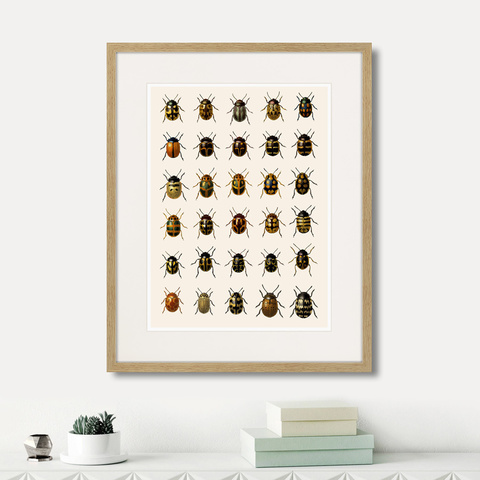 Марк Кейтсби - Assorted Beetles №2, 1735г.