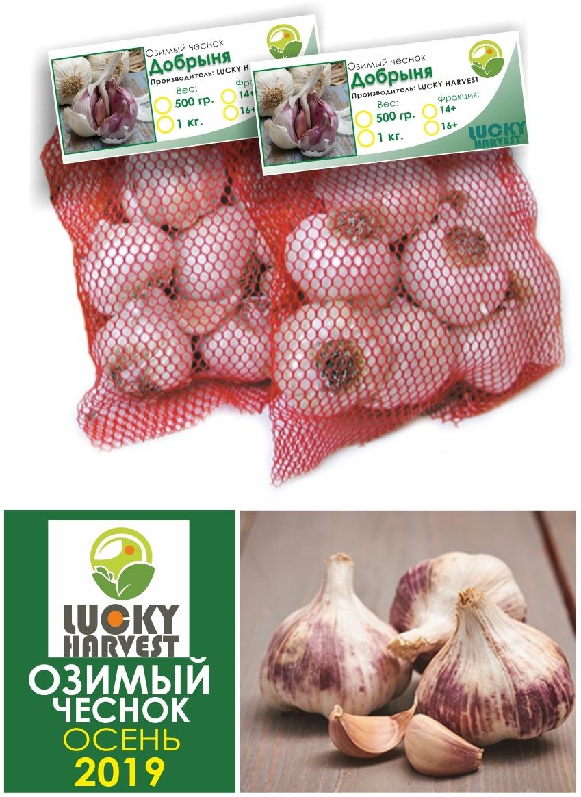 Озимый чеснок  Добрыня   0,5 кг.  LUCKY HARVEST (Украина)
