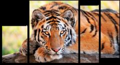 """Модульная картина """"Тигр"""""""