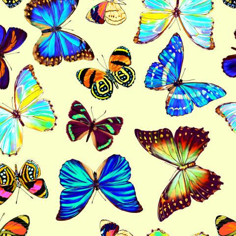 тропические бабочки_01