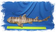 Зебровая разнозубая акула, Heterodontus zebra