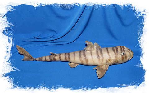 Зебровидная бычья акула (чучело)
